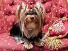 Фотография в Собаки и щенки Стрижка собак Ваш питомец будет самым красивым! ! ! ! ! в Владивостоке 0