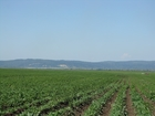 Увидеть foto  Продам земельный массив 665 га в Кемеровской области г, Новокузнецк 34534062 в Владивостоке