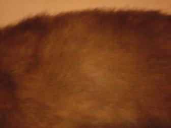 Смотреть фото Коллекционирование Продам шкурки норки и воротники из песца во Владивостоке 35292748 в Владивостоке