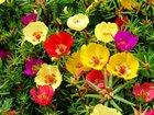 Фото в Домашние животные Растения Хотите яркую разноцветную клумбу, для которой в Волгограде 5
