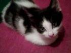 Фотография в Кошки и котята Продажа кошек и котят Отдадим в хорошие добрые руки котят. У нас в Волгограде 0