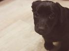Фото в Собаки и щенки Продажа собак, щенков 3 щенка, в добрые руки. Им примерно 3 месяца, в Волгограде 0
