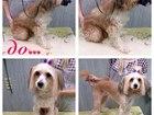 Скачать бесплатно фотографию Услуги для животных стрижка собак в волгограде 34035696 в Волгограде