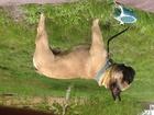 Смотреть фото  Пропала собака 34323145 в Волгограде