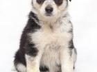 Фото в Собаки и щенки Продажа собак, щенков Отдается в добрые руки девочка, возраст 1, в Волгограде 50