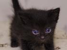 Фото в Отдам даром - Приму в дар Отдам даром Отдам котят в добрые руки. Родились 1-04-2016. в Волгограде 0
