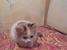 Увидеть foto Отдам даром Отдам котёнка в добрые руки 35275039 в Волгограде