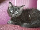 Изображение в Отдам даром - Приму в дар Отдам даром Отдам чёрного котёнка в добрые руки, к туалету в Волгограде 0