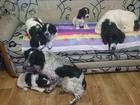 Фотография в Собаки и щенки Продажа собак, щенков Чистокровные детки, умные, красивые, шустрые. в Волгограде 0