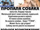 Бордер-терьер фото в Волгограде