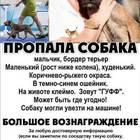Пропала собака, бордер терьер! большое вознаграждение!