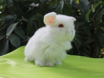 Уникальное фото Другие животные Декоративные и карликовые кролики 37272783 в Волгограде