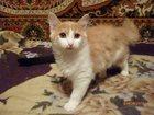 Фотография в Отдам даром - Приму в дар Отдам даром Отдам милую, забавную кошечку в добрые руки. в Вологде 50