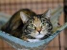Фото в Кошки и котята Продажа кошек и котят Посмотрите в эти глаза !   Чудесная девочка, в Вологде 0