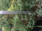 Уникальное фото Растения Растения с доставкой до объекта в наличии и на заказ, 38802754 в Вологде