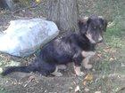 Просмотреть фотографию Потерянные Пропала собака 33492361 в Воронеже