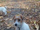 Новое изображение Потери Пропала собака 33931819 в Воронеже