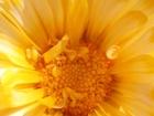 Смотреть foto  семена садовых цветов и пряных трав 37974296 в Воронеже