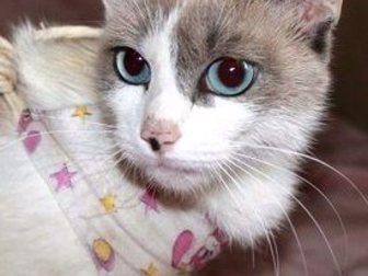 Смотреть фотографию Приму в дар Красивая кошечка в дар 33380015 в Воронеже