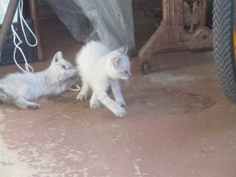 Новое изображение Отдам даром отдам даром котёнка 33482329 в Воронеже