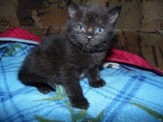 Уникальное фотографию Отдам даром Отдадим котят в хорошие руки 33753372 в Воронеже