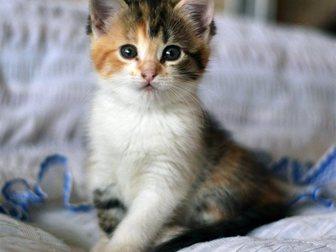 Новое изображение Отдам даром котята 33771363 в Воронеже