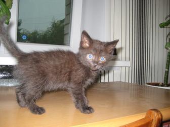 Скачать бесплатно фото  Отдам в хорошие руки котенка (девочку) 39720550 в Воронеже