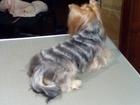 Новое фотографию Услуги для животных Стрижка собак и кошек Воскресенск 38962598 в Воскресенске