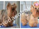 Скачать бесплатно foto Услуги для животных Салон груминга «Модный Дом» 32559947 в Зеленограде