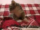 Свежее фотографию Приму в дар Отдам в дар котенка 33269879 в Зеленограде
