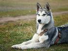 Смотреть изображение Услуги для животных Дрессировка щенков в Зеленограде,Фирсановке 33935399 в Зеленограде