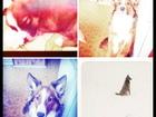 Скачать бесплатно фото Отдам даром - приму в дар отдам в хорошие руки собаку 38625506 в Зеленограде