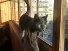 Скачать бесплатно фото Отдам даром - приму в дар Отдам котика в добрые руки! Взяла на передержку, не ужился с другим котом, Возраст около года, некастрированный, к лотку приучен, от паразитов обработан, добрый 68597541 в Зеленограде