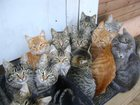 Фотография в   SOS! ! ! ! Эти котята были в разное время в Жуковском 1